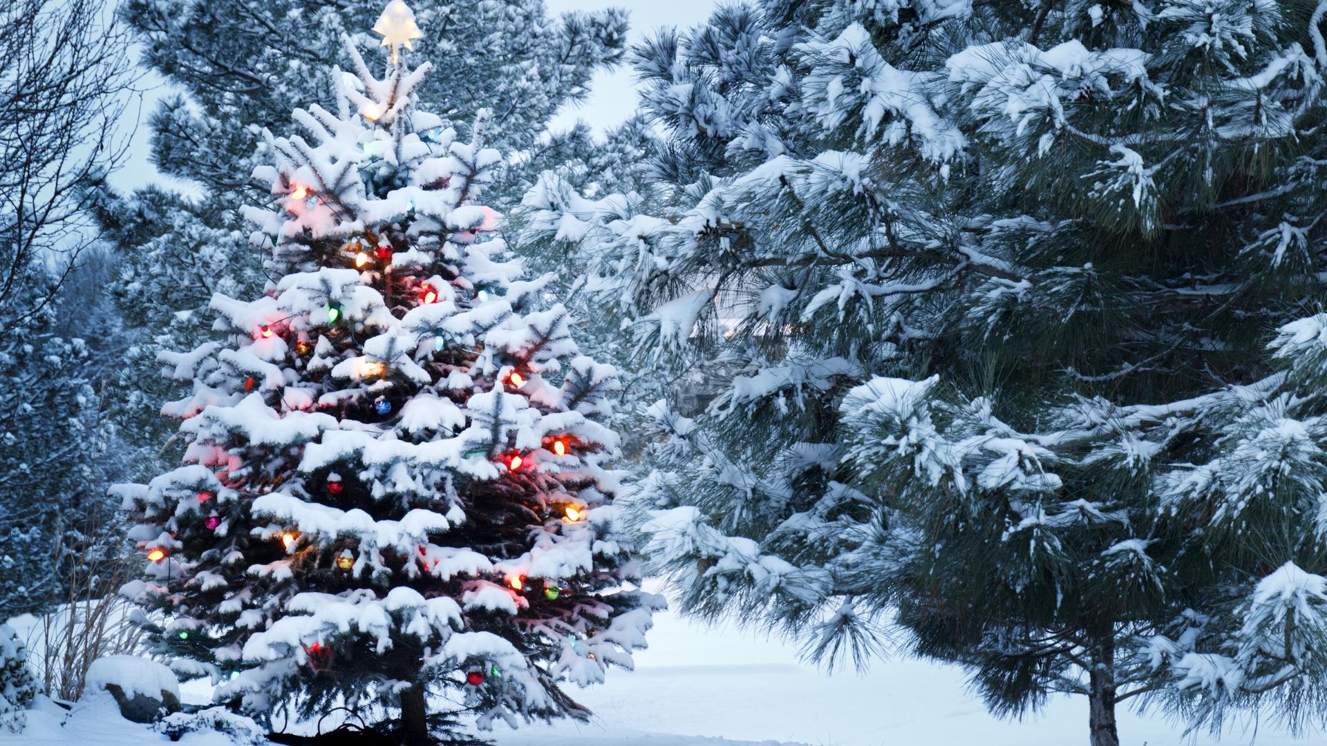 Спрос на заграничные новогодние туры падает